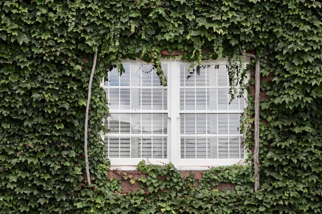 white window surrounded by green plants